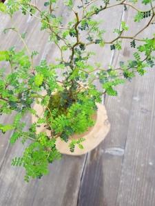 rostliny v mechu