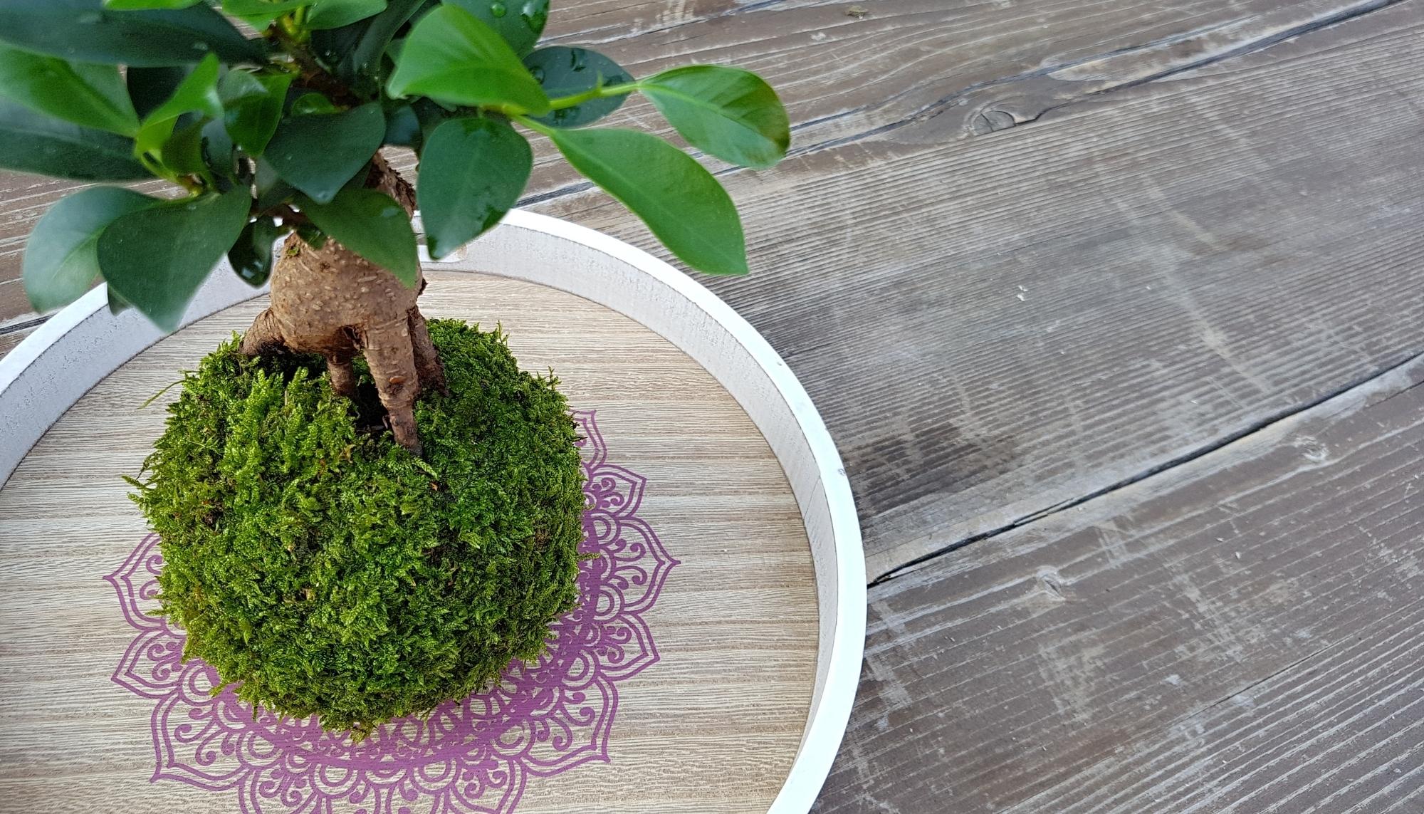 pěstujte rostliny netradičně