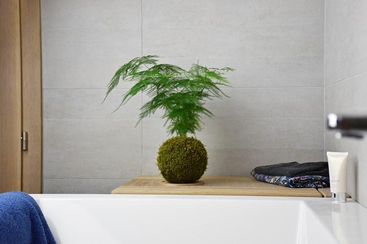 Kokedamy a pokojové rostliny: jak je vybírat?