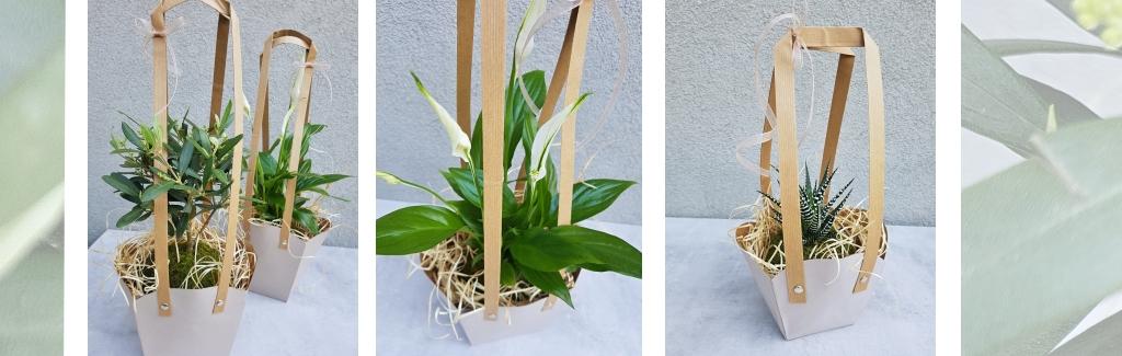 Dárkové balení rostlin