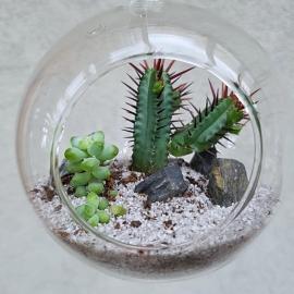 skleněné aerárium, 8 cm