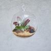 skleněné aerárium, 12 cm